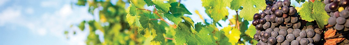 Vin Val de Loire AOC Blanc et Rouge- Vente de Vin en ligne - Viniphile