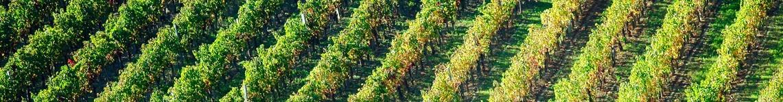 Alsace AOC : Viniphile, vente de vin de Alsace AOC en ligne