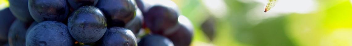 Vins AOC Beaujolais : Viniphile, achat vin en ligne, tous les vins des cépages du Beaujolais