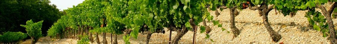 Vins AOC Côtes du Rhône : Viniphile, vente de vin en ligne, un large choix de Côtes du Rhône AOC